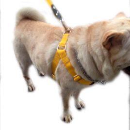 Peitoral Com Guia P/cães Grande Porte
